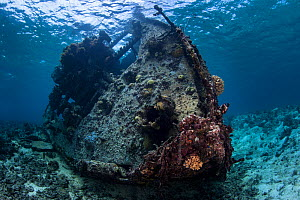 Wreck of the  Coomondeery a 132-tonne, 110- foot steamship, later converted to diesel auxiliary in Australia,  was wrecked on North Minerva Reef in 1969. January 2015 - Richard Robinson