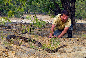 Photographer Axel Gomille, watching Indian python (Python molurus), Rajasthan, India - Axel  Gomille