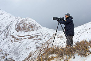 Photographer Axel Gomille, tracking and photographing snow leopards (Panthera uncia), Himalaya, Hemis National Park, Ladakh, India. February 2014.  -  Axel  Gomille