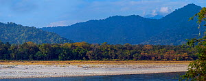 Foothills of the Himalayas, Manas River, Manas National Park, Assam, India. December 2006. Digitally stitched panorama.  -  Axel  Gomille