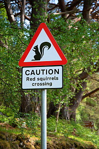 Sign warning drivers of Red squirrel (Sciurus vulgaris) crossing. Re-introduction project, Torridon, Scotland, UK. May 2018. - Adrian Davies