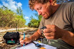Scientist Nathan Cooper writing down data after he weighs and measures a Kirtland's warbler (Setophaga kirtlandii) Cat Island, Bahamas, April 2017. - Karine Aigner