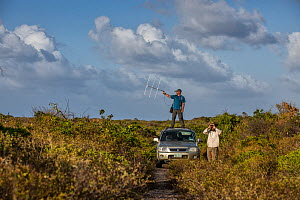 Scientists Stephen Caird and Chris Fox check the GPS waypoints where they know Kirkland's Warblers have been fitted with transmitters. They use telemetry to make sure the birds are still on the is... - Karine Aigner