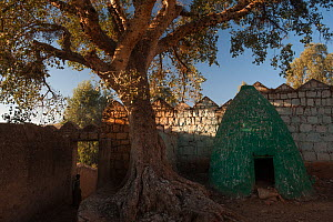 Tree next growing next to old tomb, City of Harar. February 2008.  -  Francisco Marquez