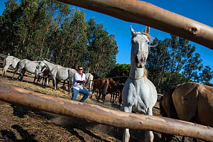 Mares and foals in corral, with man pulling mare towards him. During the round up of mares and foals each yeguero (owner of the mares) identifies their animals, separates the foals from their mothers,... - Francisco Marquez