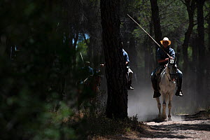 Men on horseback during the round up of mares and foals from marshland to the corrals of the town.  Donana National Park, Spain. September 2014. - Francisco Marquez
