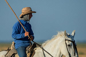 Man on horseback during the annual round up and transfer of the mares and foals from the marsh to the corrals of the town. Donana National Park, Spain. September 2014. - Francisco Marquez