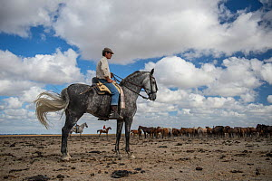 Man on horseback during the round up and transfer of the mares and foals from the marsh to the corrals of the town. Donana National Park, Spain. September 2014. - Francisco Marquez