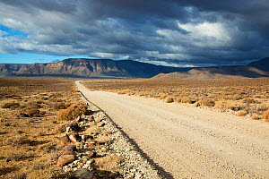 Gravel road, Tankwa Karoo National Park, Western Cape Province  -  Richard Du Toit