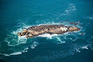 Aerial view of of Cape Fur Seal (Arctocephalus pusillus) colony on Seal Island, Western Cape, South Africa.  -  Richard Du Toit