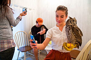 People photographing Spotted eagle owl (Bubo africanus) and taking selfies with mobile phones at the Akiba Fukurou Owl Cafe, Tokyo, Japan. - Karine Aigner