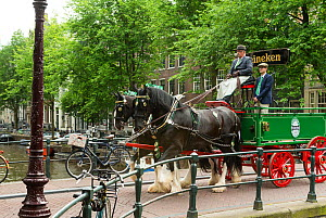 Two rare Shire horses pull a Heineken dray, near a canal, on the streets of Amsterdam, the Netherlands, June 2018.  -  Kristel  Richard
