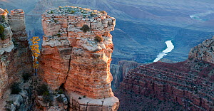 Moran Point with Ponderosa pine (Pinus ponderosa) and rock spires, Grand Canyon National Park, Arizona, USA.  -  Jack Dykinga