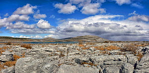 Limestone pavement at The Burren National Park, Lough Gealain, Mullaghmore, County Clare, Republic of Ireland. April 2016.  -  Robert  Thompson