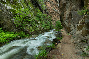 Caranca river flowing through steep-sided gorge. River Gorges de la Caranca / La Vallee de la Caranca. Thues Entre Valls, Pyrenees Orientales, south west France. May 2018. - Robert  Thompson