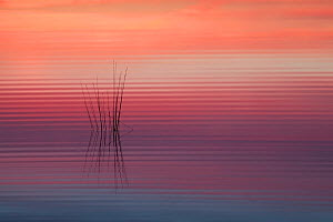 Sunrise reflected in water with ripples, Klein Schietveld, Brasschaat, Belgium - Bernard Castelein