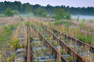 Remnants of old military railway,  Klein Schietveld, Brasschaat, Belgium, July 2013.  -  Bernard Castelein