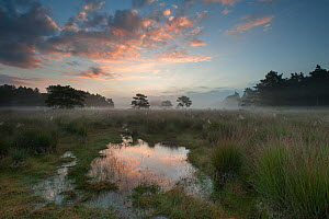 Sunrise over Klein Schietveld, Brasschaat, Belgium. July 2014.  -  Bernard Castelein