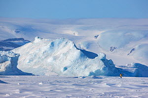 View of tourist walking near Emperor penguin colony at Snow Hill Island rookery, Weddell Sea, Antarctica. - Sue Flood