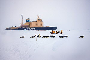 Emperor penguins (Aptenodytes forsteri) and tourists on sea ice in front of Russian icebreaker Kapitan Khlebnikov  in the sea ice near Snow Hill Island colony, Weddell Sea, Antarctica.  -  Sue Flood