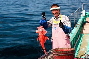 Fisherman holding deep-sea Rockcod (Sebastes matsubarai) on fishing boat. Suruga Bay, Shizuoka Prefecture, Honshu, Japan. April 2018.  -  Tony Wu