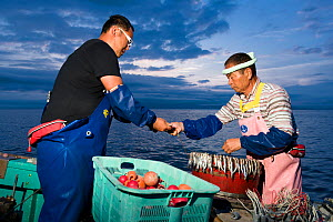 Fishermen, father and son, preparing bait and lines in the pre-dawn hours for deep sea fishing. Suruga Bay, Shizuoka Prefecture, Honshu, Japan. April 2018. - Tony Wu