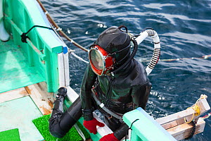 Ama diver climbing aboard boat after spending two hours collecting seafood. Futo Harbour, Izu Peninsula, Shizuoka Prefecture, Japan. June 2010.  -  Tony Wu