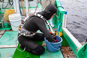 Ama diver cleaning her face mask in preparation for going to work underwater. Futo Harbour, Izu Peninsula, Shizuoka Prefecture, Japan. June 2010.  -  Tony Wu