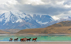Gaucho herding horses on the shoreline of Lago Almarga in the morning light, with Torres del Paine mountains in background under stormy skies. Patagonia, Chile. - Jack Dykinga