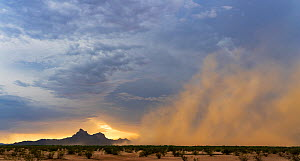 Dust and sand storm sweeping across Sonoran Desert at sunset to Picacho Peak, Picacho Peak State Park, Arizona, USA. August, 2018.  -  Jack Dykinga