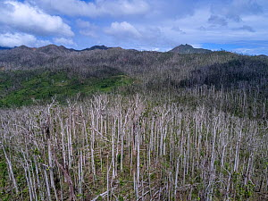 Aerial drone image of the Central forest, although it is starting to recover from the hurricane Maria, however many of the tall standing trees are dead. Dominica, Eastern Caribbean. January 2018. - Derek Galon