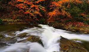 Little River, Smoky Mountains, Tennessee, USA. November 2017  -  Oliver Hellowell