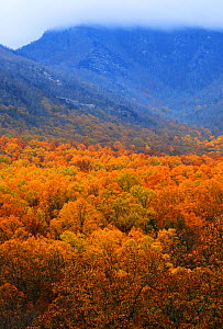 Autumn forest landscape in Tennessee, USA, November, 2017  -  Oliver Hellowell