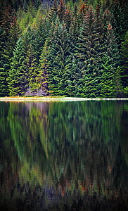 Reflected evergreen trees in Loch Dunmore, Perthshire, Scotland, UK, August 2014  -  Oliver Hellowell