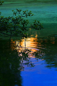 Reflections on water at sunset, England, UK, July.  -  Oliver Hellowell
