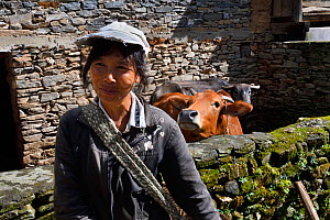 Farmer with two cows in background. Stone village in Wuliangshan Nature Reserve, Jingdong, Yunnan Province, China. October 2017.  -  Magnus Lundgren / Wild Wonders of China