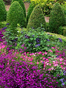 Pink Petunia and bedding plants in containers in garden, England, UK. July - Ernie  Janes