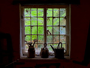 Potting Shed window with cobwebs, in garden outbuilding - Ernie  Janes