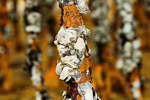 Barnacles and oysters on mangrove in Ha Pak Nai, a mudflat in the Yuen Long District, Hong Kong, China. - Magnus Lundgren / Wild Wonders of China