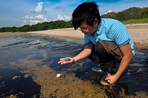 Staff from Ocean Park Conservation Fund, OPCF, and students visit Ha Pak Nai to see the juvenile chinese horseshoe crabs (Tachypleus tridentatus) in a mudflats, Yuen Long District, Hong Kong, China.  -  Magnus Lundgren / Wild Wonders of China
