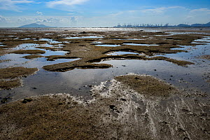 Ha Pak Nai, a wetland area dominate by a mudflats, Yuen Long District, New territories, Hong Kong, China.  -  Magnus Lundgren / Wild Wonders of China
