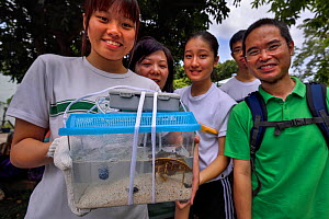 Secondary school students release a juvenile, age six months, Chinese horseshoe crab (Tachypleus tridentatus) that has been bred by City University of Hong Kong, Ha Pak Nai wetlands area Yuen Long Dis...  -  Magnus Lundgren / Wild Wonders of China