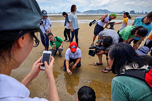 Joe Cheung from the Ocean Park Conservation Foundation Hong Kong , showing students juvenile Chinese horseshoe crab (Tachypleus tridentatus) Ha Pak Nai Wetlands, Hong Kong, China. June, 2016.  -  Magnus Lundgren / Wild Wonders of China