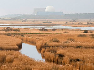 View from Dunwich Heath across Minsmere RSPB Reserve, with Sizewell Poer Station, in distance winter. Suffolk, England, UK. February. - David Tipling
