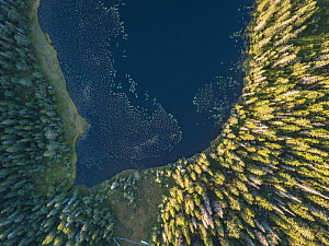 End of lake surrounded by coniferous forest. Aerial view, High Coast World Heritage Site, Vasternorrland, Sweden. August, 2018. - Pal Hermansen