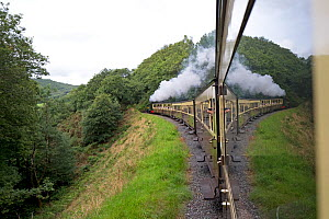 View out of train on the Ceredigion The Vale of Rheidol Railway, Wales, UK. August.  -  Robin Chittenden