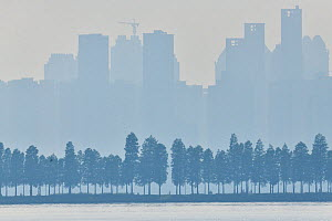 Silhouetted row of trees in front of high rise buildings, East Lake Greenway park, Wuhan, Hubei, China - Staffan Widstrand / Wild Wonders of China