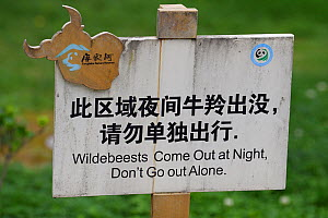 Wildlife warning sign 'Wildebeest come out at night. Don't go out Alone'. This is likely a mistranslation of the world for Takin, which is similar to the word for Wildebeest Tangjiahe Nati...  -  Staffan Widstrand / Wild Wonders of China