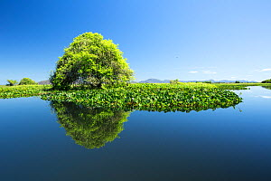 Trees reflected in the a tributary river connected to Paraguay River, Pantanal, Brazil  -  Franco  Banfi