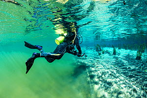 Scuba diver swimming from the main river to a branch powered by a spring with clearer water, Bonito, Mato Grosso do Sul, Brazil  -  Franco  Banfi
